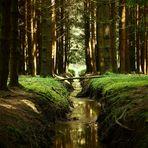 Kanal im Wald