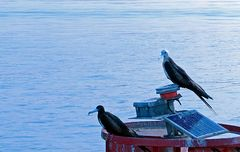 Kanalvögel
