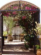 Kanarische Einblicke auf Fuerteventura