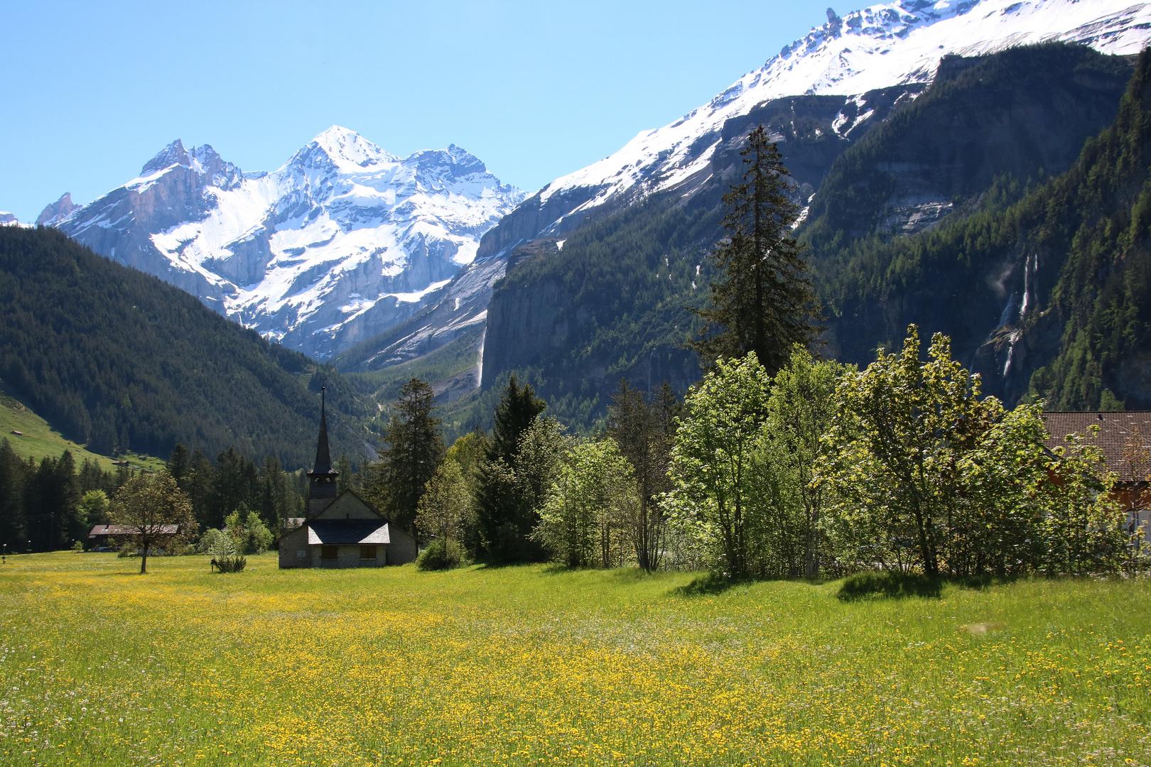 Kandersteg, Blütenpracht und schneebedeckte Gipfel