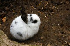 Kaninchen [1x]