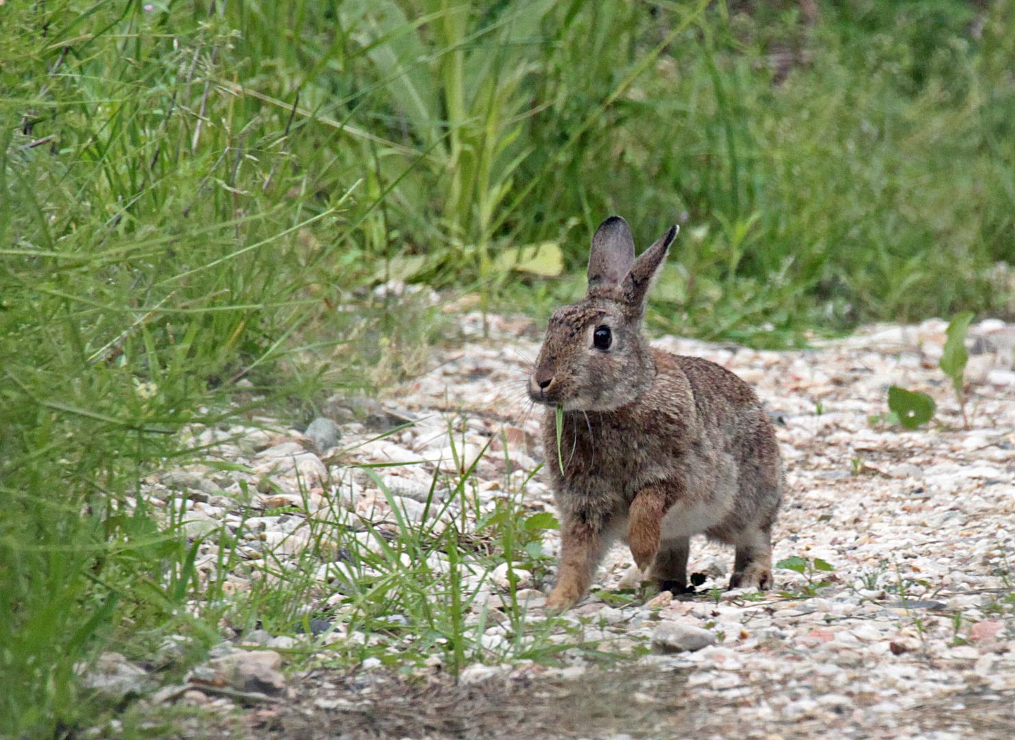 Kaninchen bei der Mahlzeit