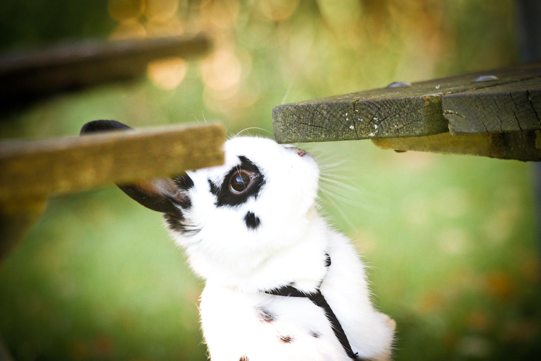 * Kaninchen *