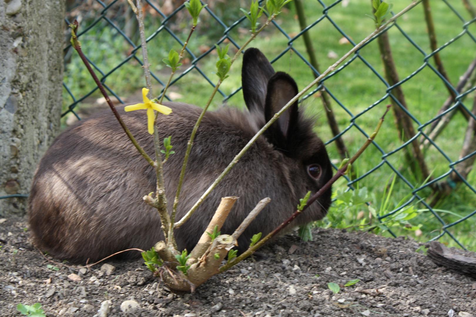 Kaninchen Im Garten Foto Bild Tiere Haustiere Nagetiere