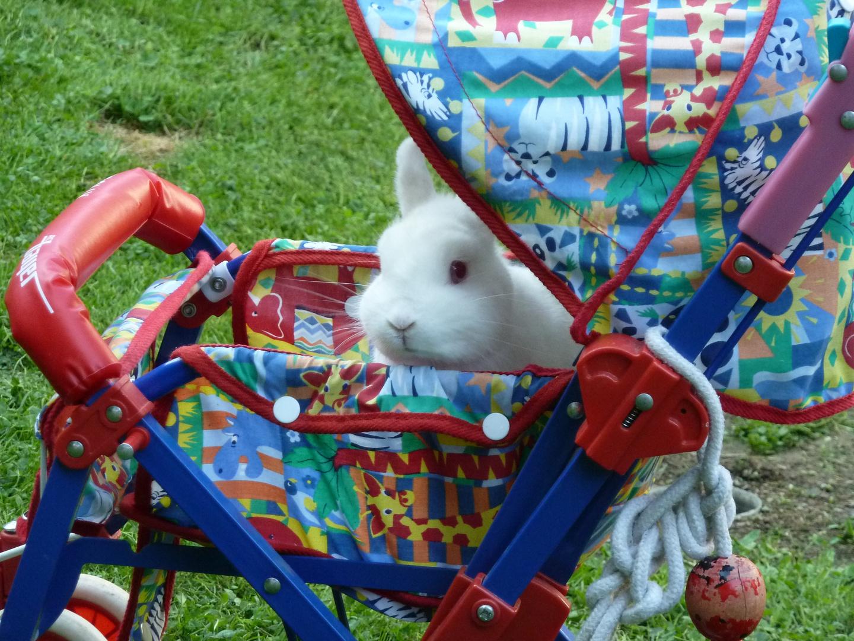 Kaninchen im Kinderwagen