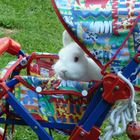 Kaninchen im Kinderwagen [Orginal]