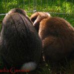 Kaninchen in der Sonne
