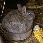 Kanincheneintopf