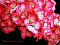 Kanmara - Die Schöne
