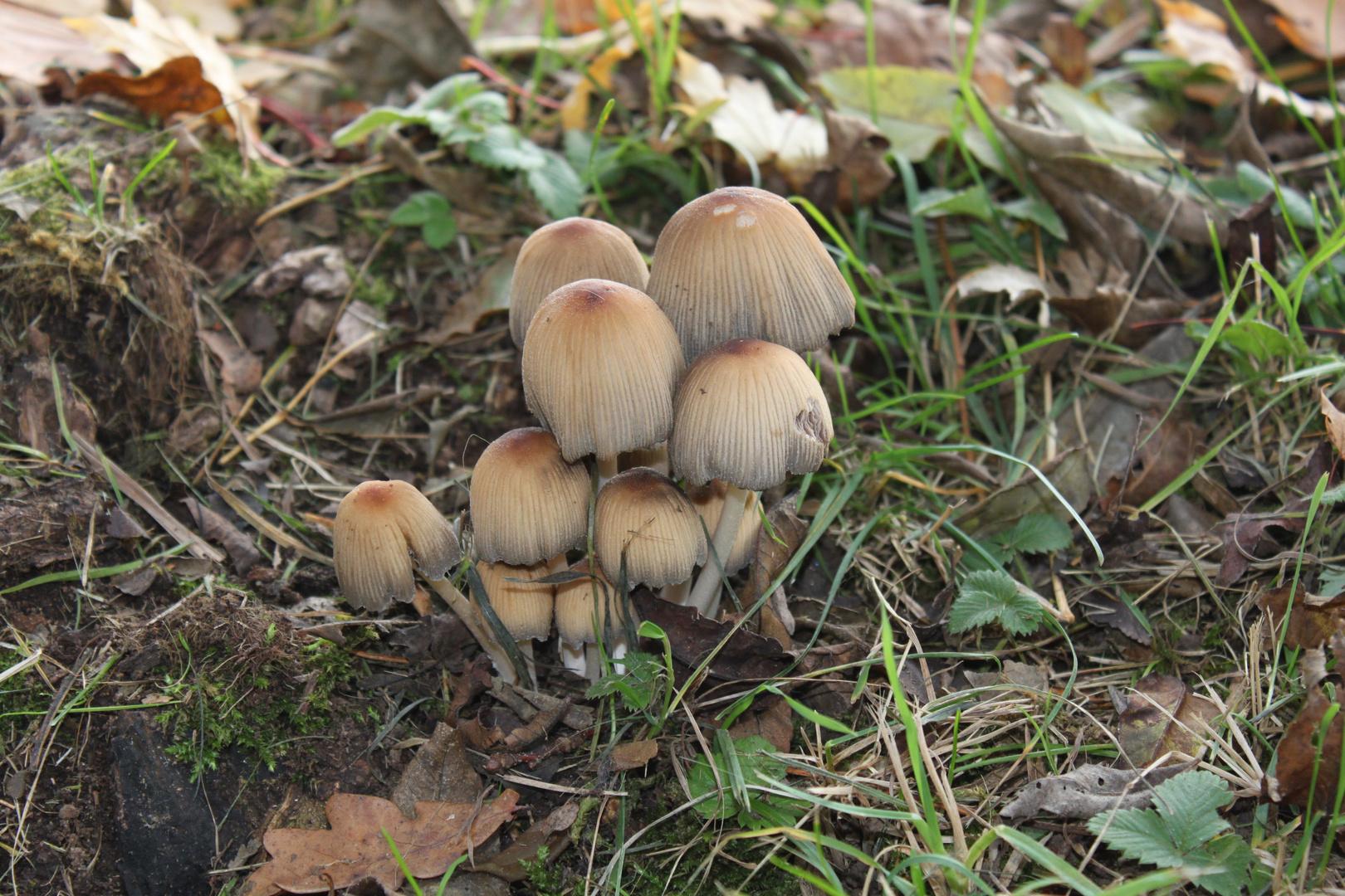 kann man die essen foto bild pflanzen pilze flechten pilze flechten natur bilder auf. Black Bedroom Furniture Sets. Home Design Ideas