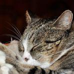 Kann Schlafen sünde sein ?