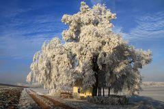 Kapelle mit Baum im Raureif