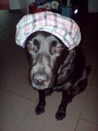 Kappe + Hund