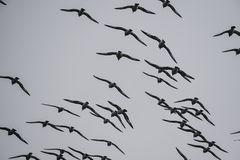 Kapsturmvögel.  .DSC_6563-2