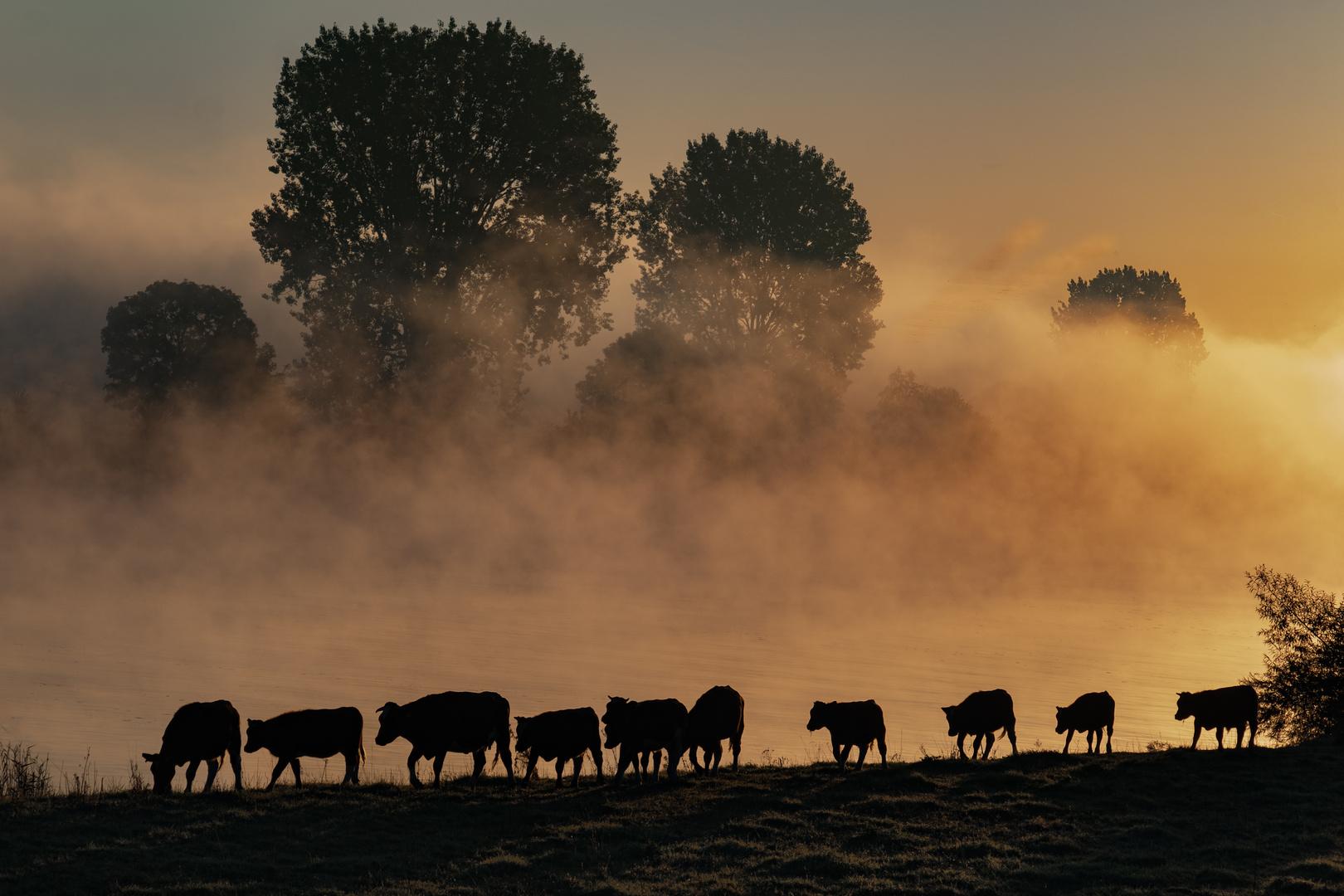 Karawane im Nebel