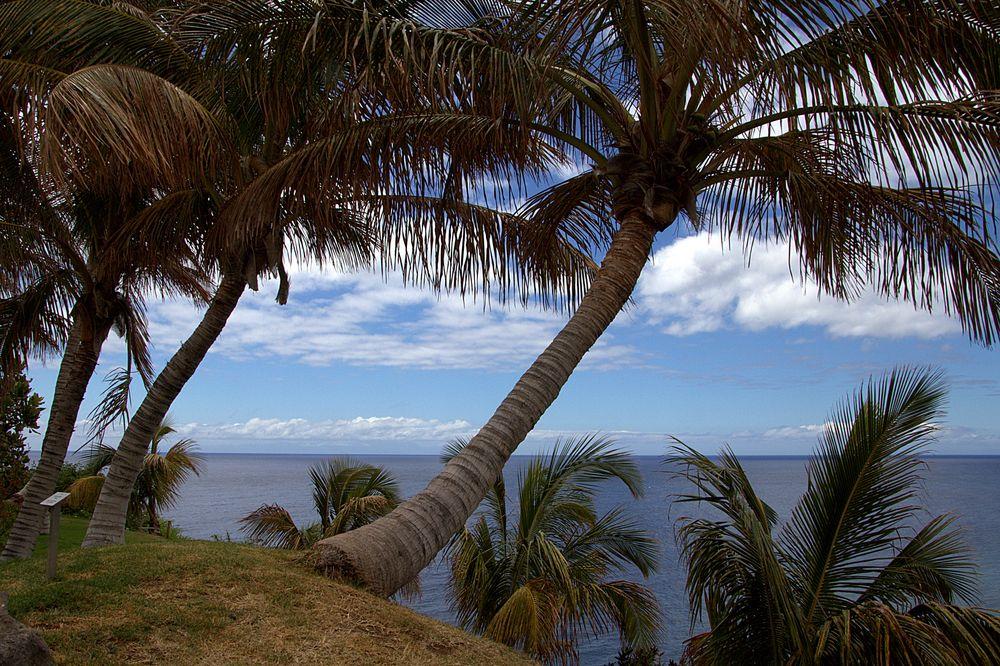 Karibik- Flair....