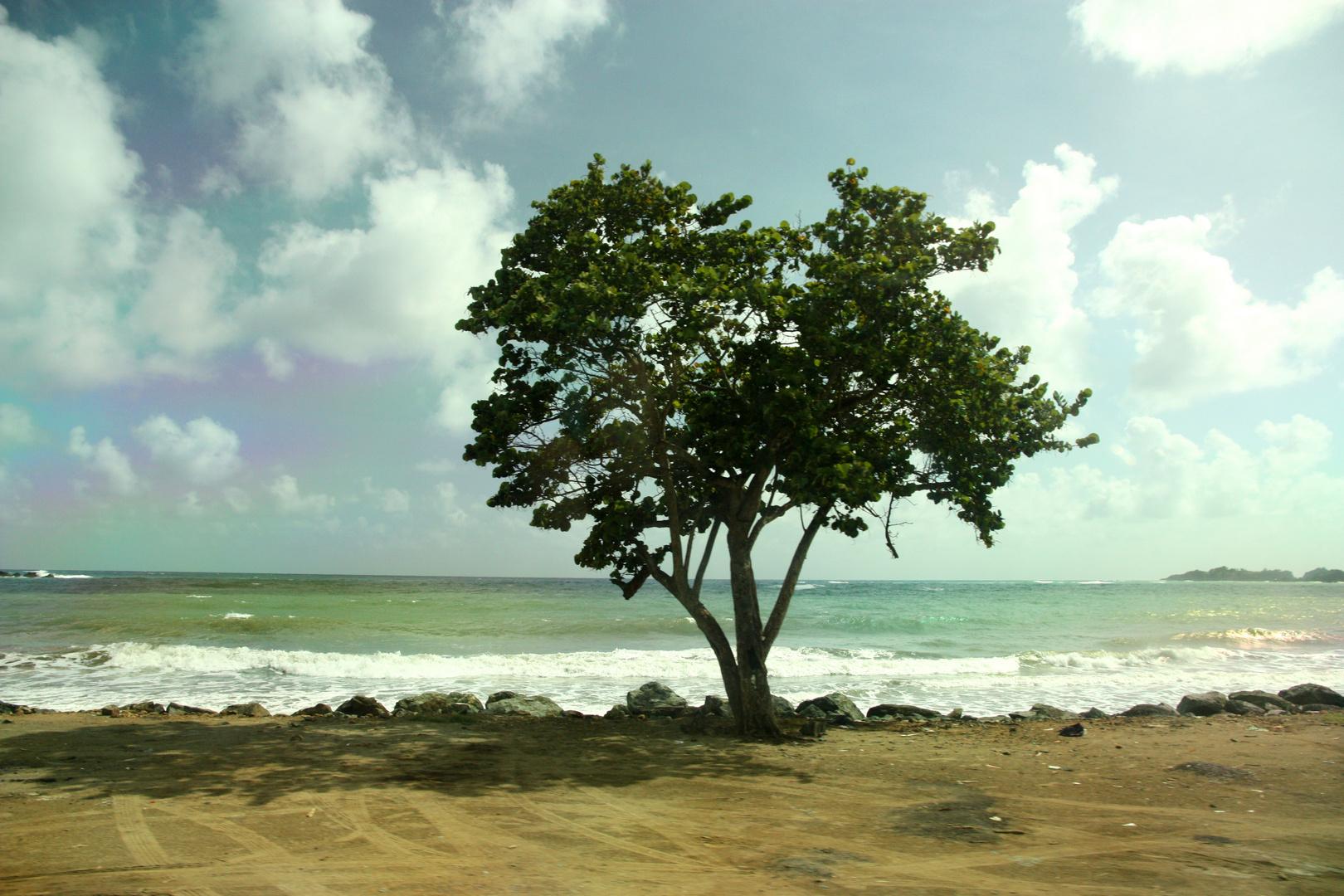 Karibik - Tobago