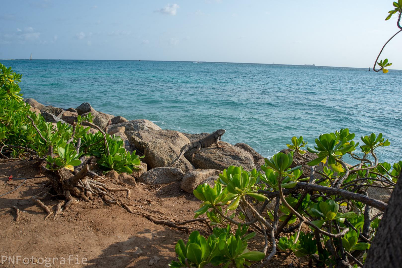 Karibik_Kreuzfahrt