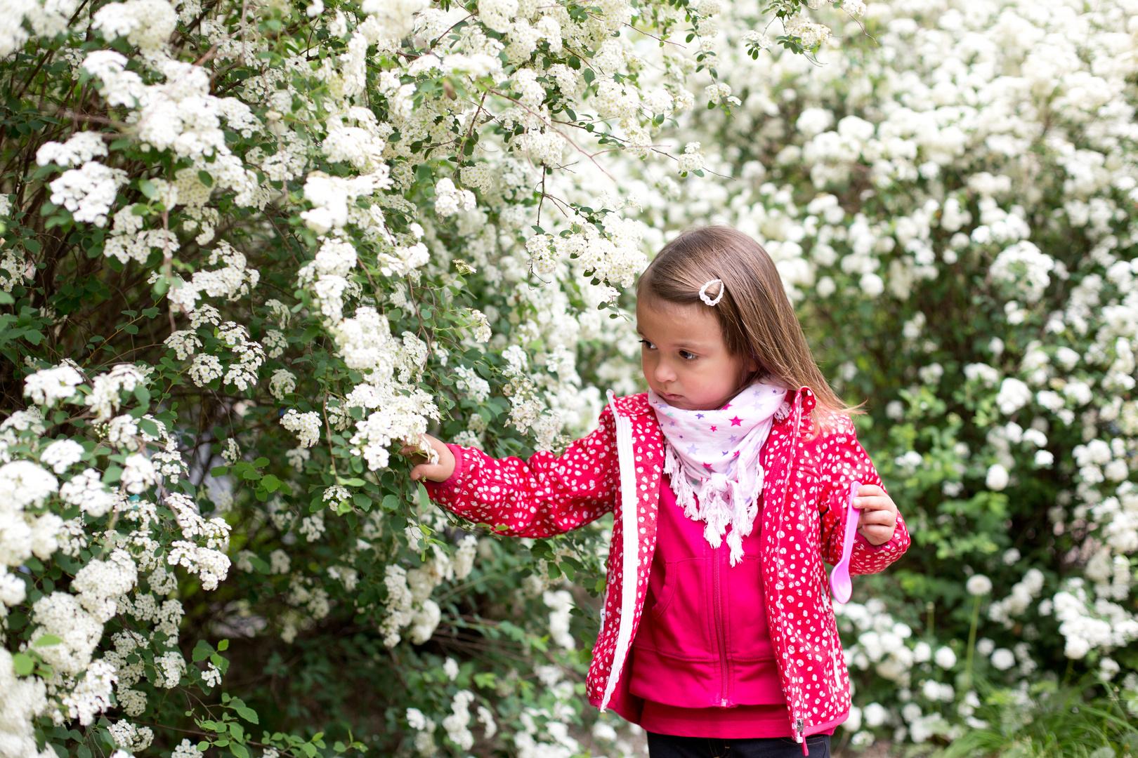 Karina mit weisen Blüten 1