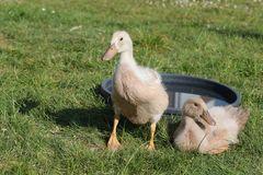 Karl-Heinz und Sabine an der Vogeltränke