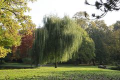 Karlsruhe Schlossgarten (II)