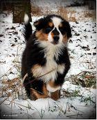 Karonase im Schnee