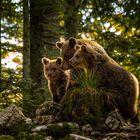 Karst-Bären