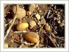 Kartoffelacker nach der Ernte