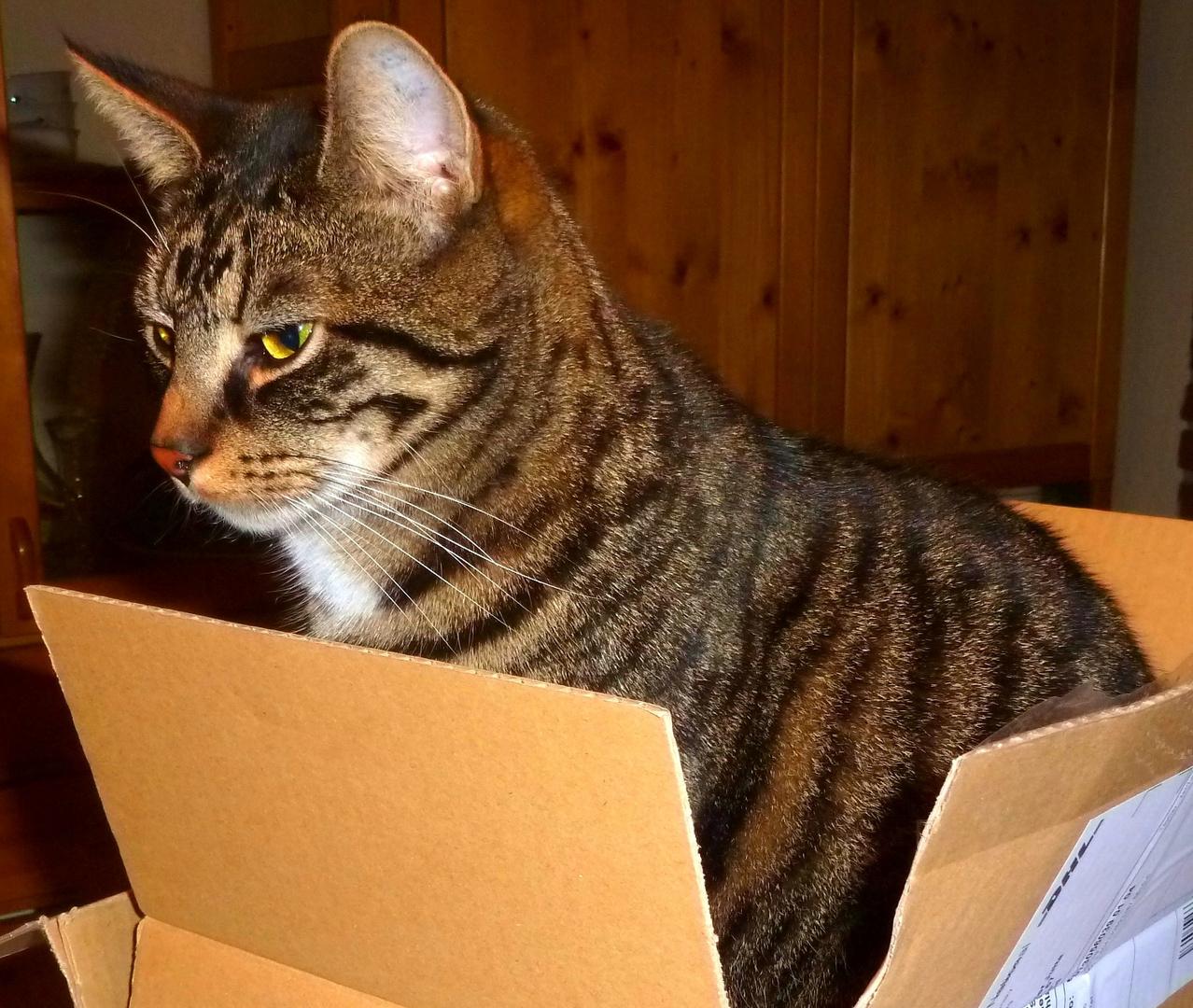 Karton 30 x 25 - Felix ausgestreckt 120 cm ;)