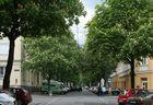 Kastanienblüte in der Hasnerstraße in Ottakring