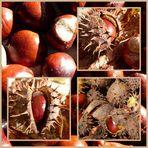 Kastanienzeit .... es ist ja Herbst