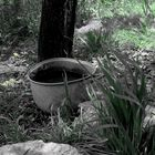 Kastrula in nature