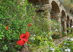 Katalanisches Mittwochsblümchen