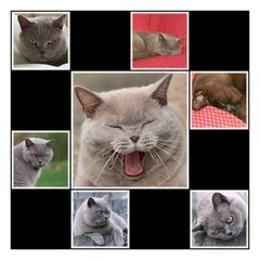 Kater-Collage