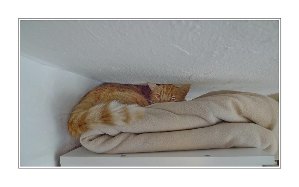 Kater Jan auf dem IKEA Kleiderschrank unter und auf unserer Decke