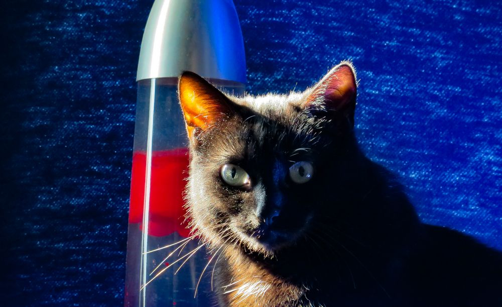 Kater Pepper beim Sonnenbad #1