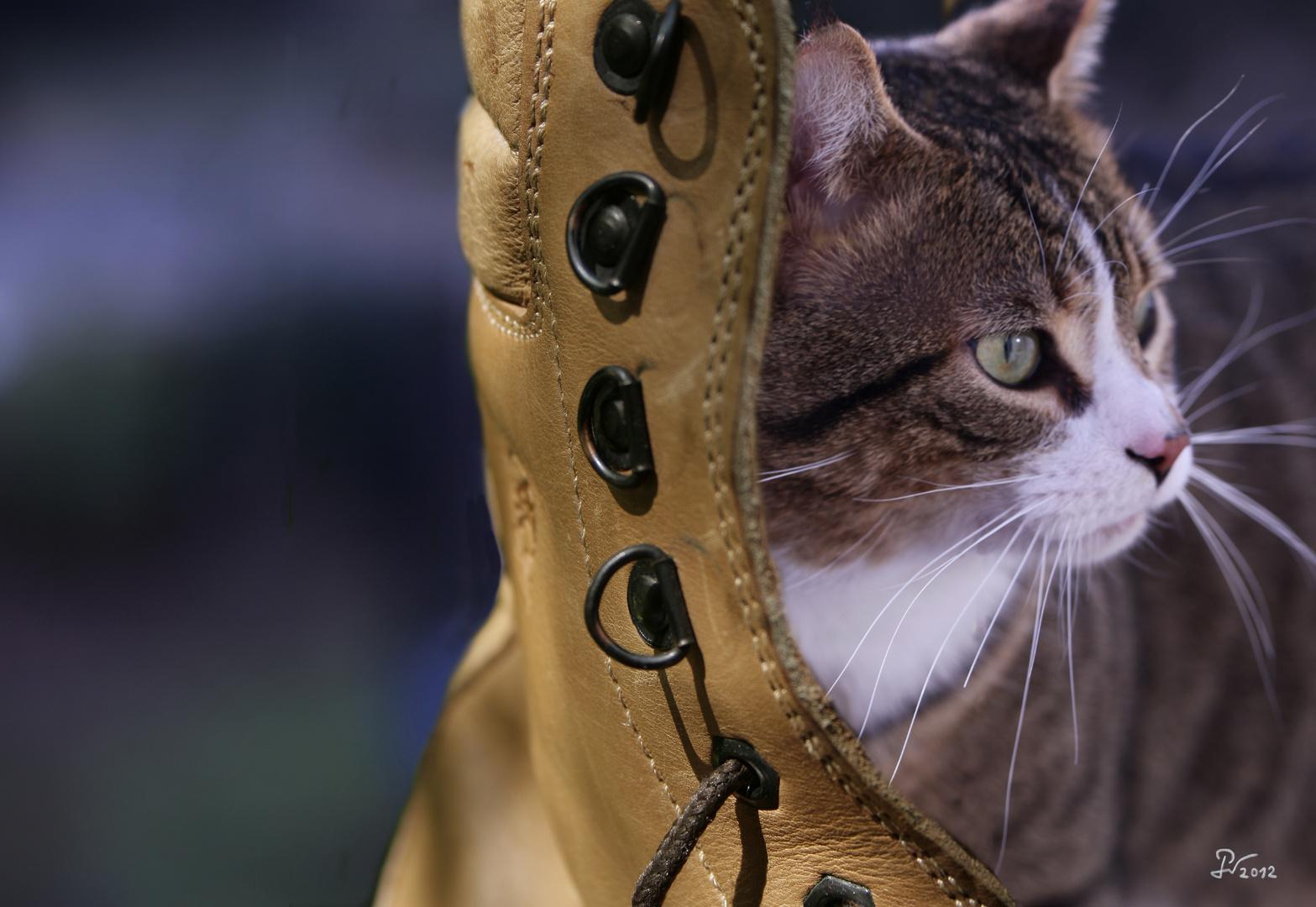 Kater und Schuh