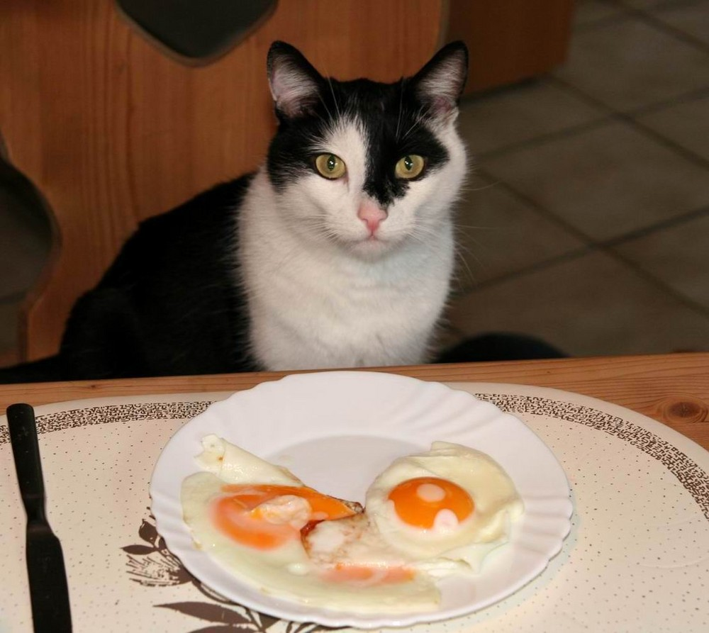 Katerfrühstück