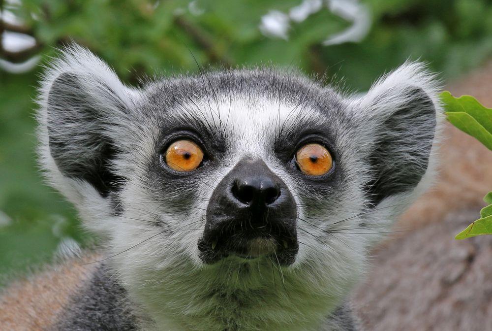 Katta-Blick