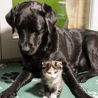 Katz & Hund