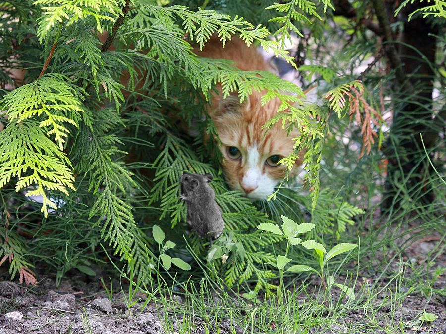 Katz & Maus Spiel