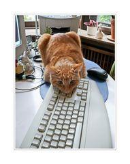 Katz, Maus und Tastatur