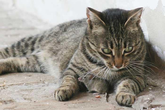 katz und Maus 3