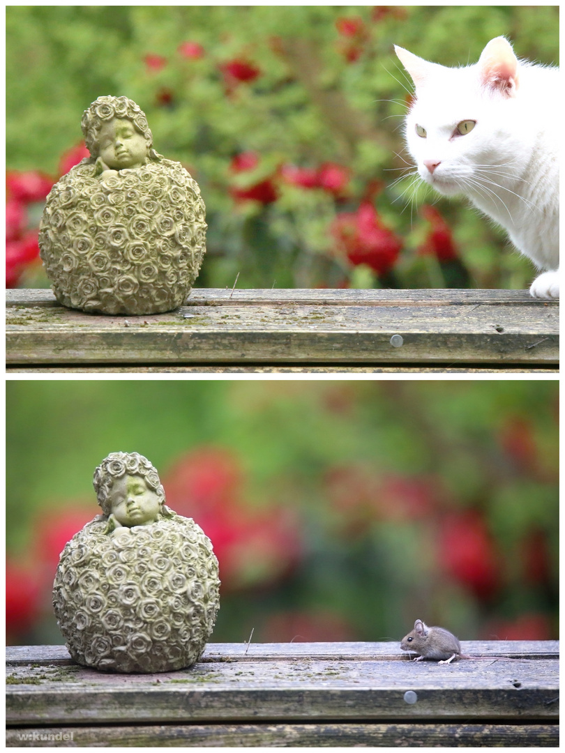Katz And Maus