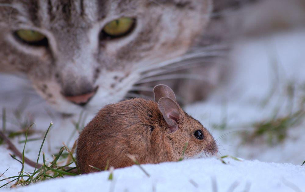 Katz Und Maus Online