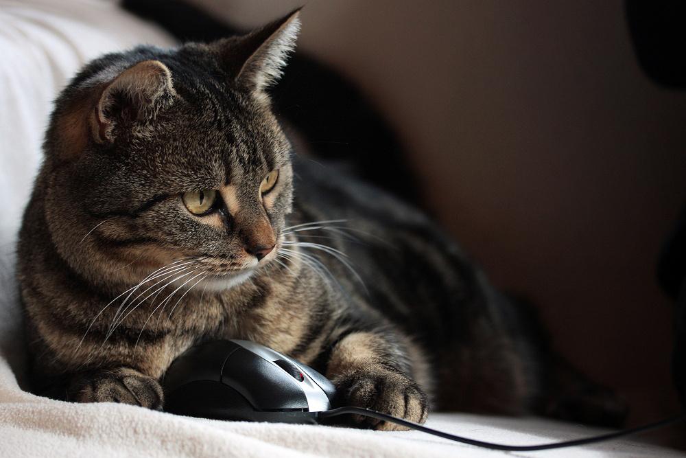 Katz Maus