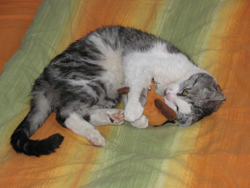 Katz und Maus II