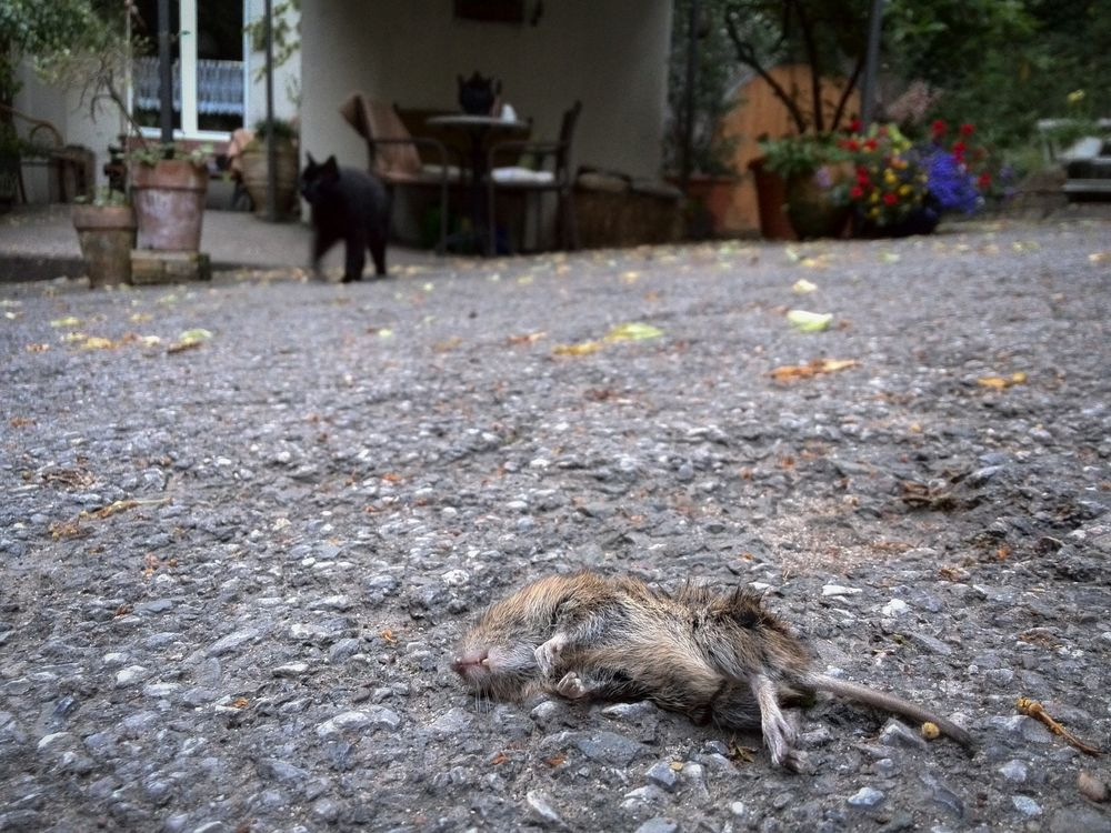 Katz-und-Maus-Spiel...