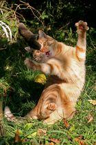 Katz und Maus Spiel