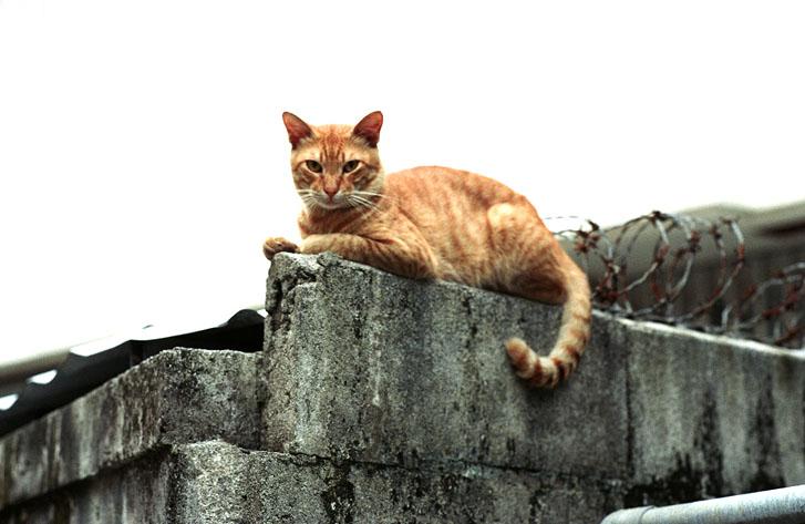 Katze (1) Naha, Okinawa